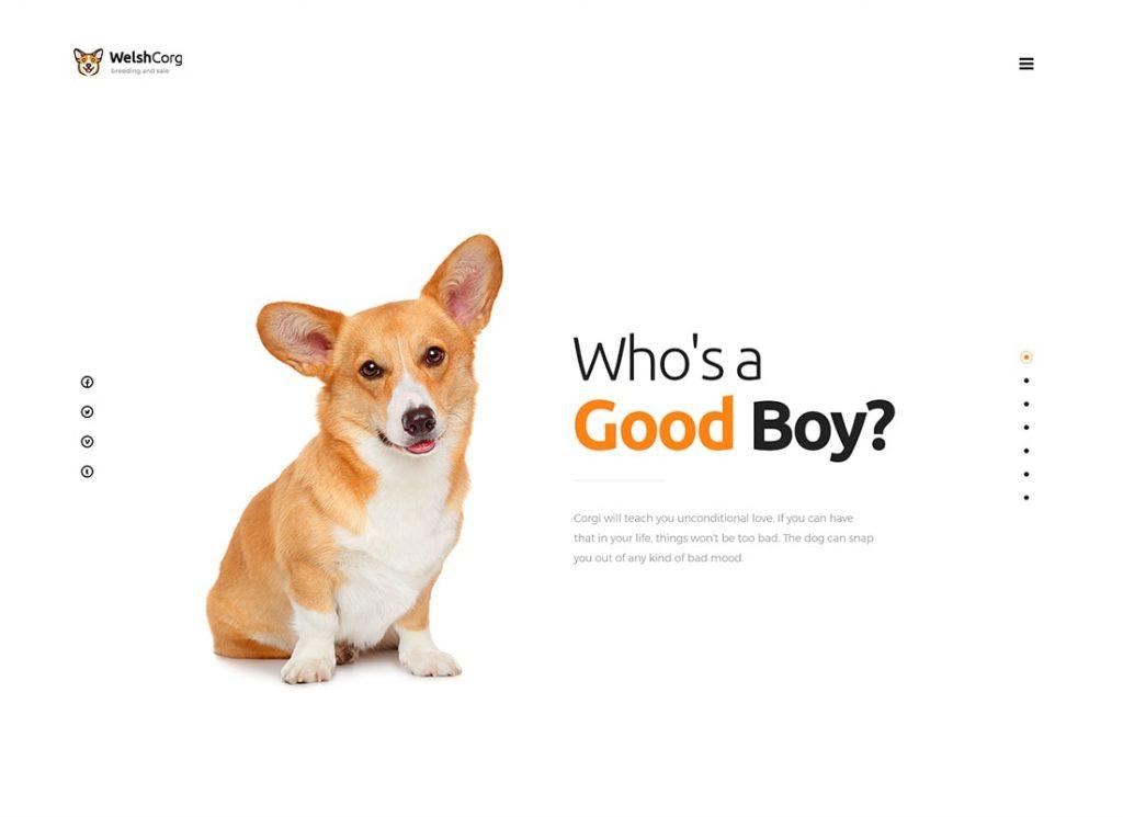 Welsh Corgi |  Thème WordPress pour l'élevage et la vente de chiens