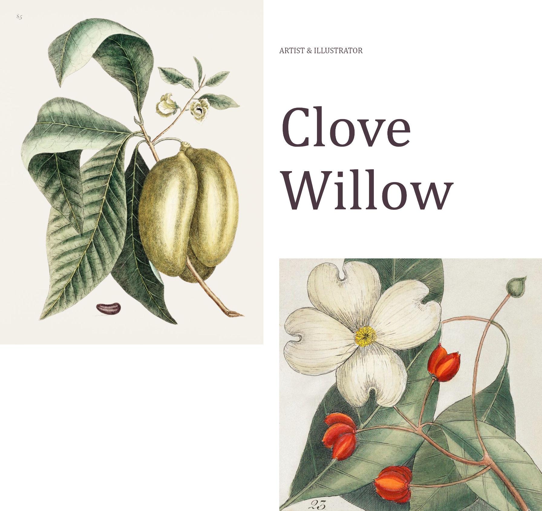 Section d'introduction de la page avec des colonnes inégales et deux images basées sur la nature.